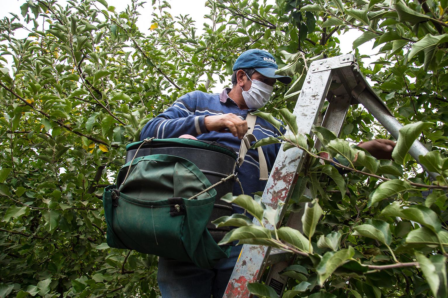 Producción frutícola en escenario de pandemia y sequía