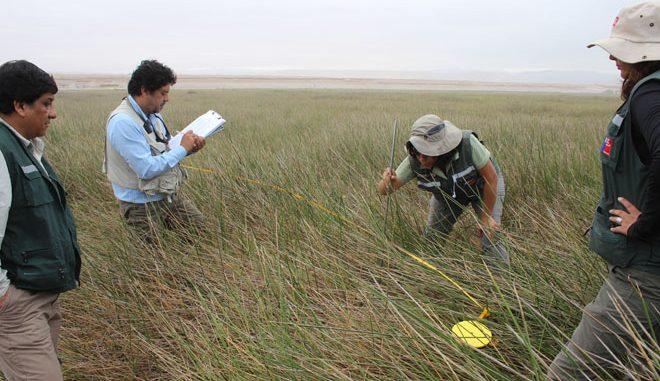 Guía evaluación ambiental: vegetación y flora silvestre de competencia SAG